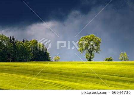 Landscape with illuminated sunlight tree before 66944730