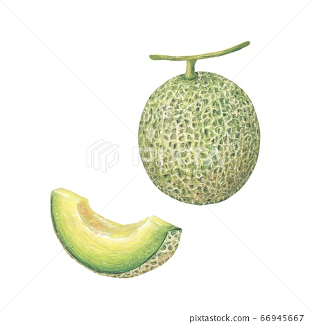 melon 66945667