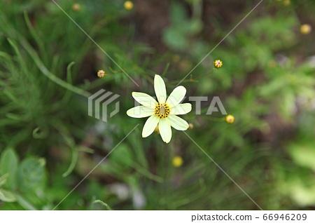 꽃 66946209