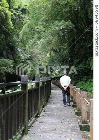 森林裡的步道 66946598