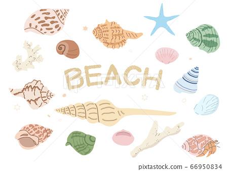 貝殼,珊瑚和海星 66950834