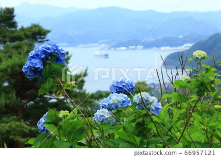 舞鶴湾과 수국 66957121
