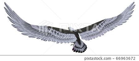 Sea eagle isolated on white background 66963672
