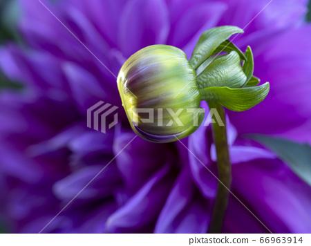 여름의 꽃 4 66963914