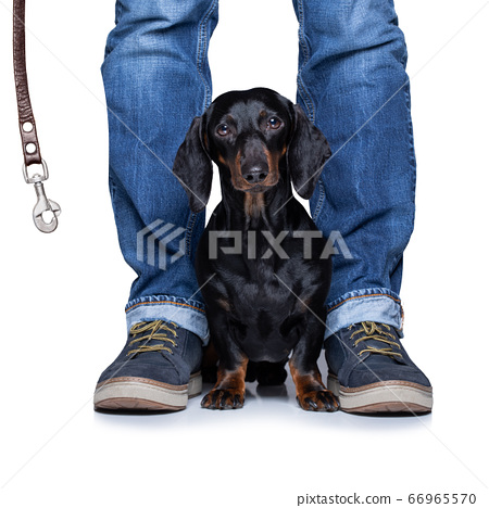 dog and owner  with leash for a walk 66965570