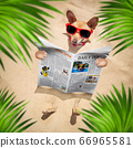 dog at the beach reads newspaper 66965581