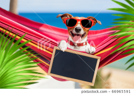 dog on hammock in summer 66965591