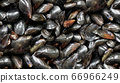 Mussels Background 66966249