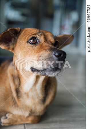 Stray dog that have been taken care stare and 66967521