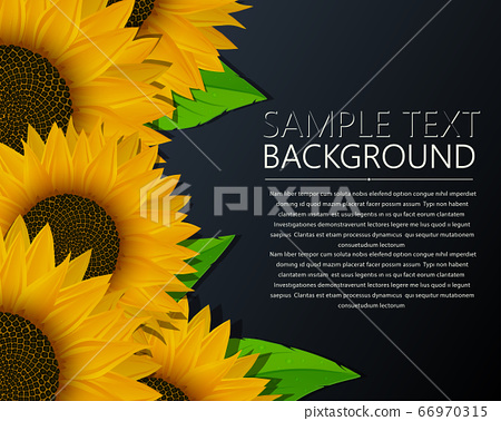 Sunflowers vector template 66970315