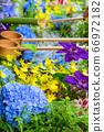 花手水與七彩花朵漂浮 66972182