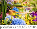 花手水與七彩花朵漂浮 66972185
