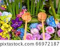 花手水與七彩花朵漂浮 66972187
