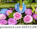 花手水與七彩花朵漂浮 66972188