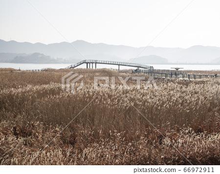 한국 충남 서천군 한산면 신성리갈대밭 66972911