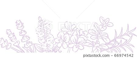 草本的剪影例證可用於橫幅,背景等的芳香油的。矢量圖像 66974542
