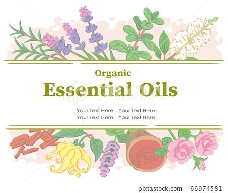 用用於香精油的草藥設計。矢量圖像 66974581