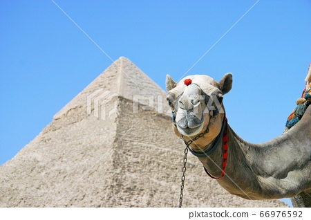 金字塔和駱駝 66976592