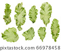 海藻材料Usba Aonori Aosa 66978458