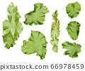 海藻材料Usba Aonori Aosa 66978459