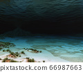 Seabed with corals 66987663