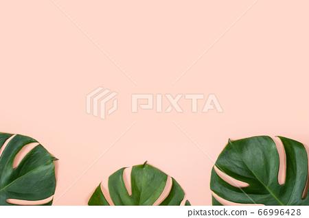 熱帶葉背景熱帶樹葉 66996428