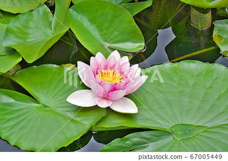 [水蓮의 꽃] 67005449