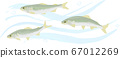 Illustration of sweetfish swimming in clear stream Hand-drawn style 67012269