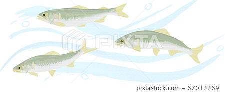 香魚在清流中游泳的插圖手繪風格 67012269