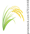 Rice 67014448