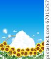 Landscape illustration of sunflower with blue sky 67015257