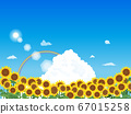 Landscape illustration of sunflower with blue sky 67015258