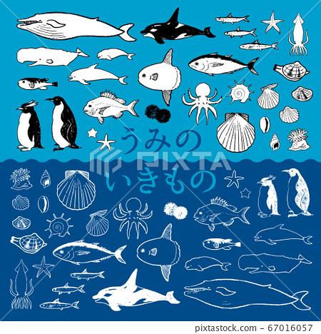 海洋生物(鉛筆圖)的矢量圖 67016057