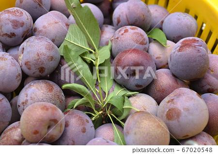 台灣水果,臺灣水果,水果,新鮮水果,紅肉李,李子 67020548