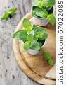 Green fresh mint on the wooden table 67022085