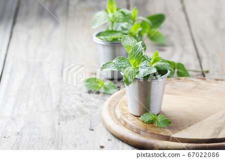 Green fresh mint on the wooden table 67022086