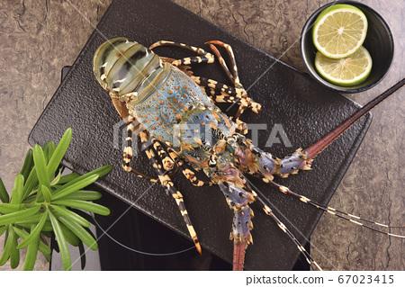 海鮮,特寫,龍蝦 67023415