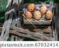 A conceptual image of Group of eggs. 67032414