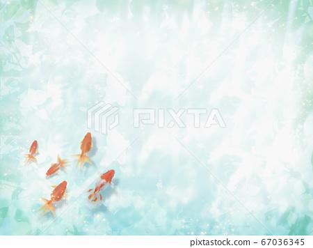 금붕어가 헤엄 수면에 코모 레비가 비치는 여름 이미지 67036345