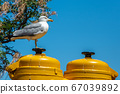 Seagull with yellow submarine 67039892