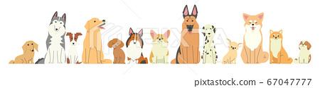 各種類型的狗彼此相鄰排列 67047777
