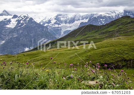 설산이 보이는 곳에 알록달록 피어있는 예쁜 꽃들  67051203