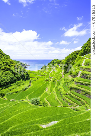 Rice terraces in Hamanoura with beautiful summer greens (Genkai Town, Saga Prefecture) 67056215