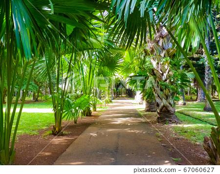 Sir Seewoosagur Ramgoolam Botanical Garden in 67060627