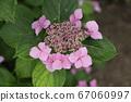 아라 오시 미야자키 형제 생가 정원의 꽃 67060997
