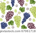 Watercolor illustrations of three types of grapes 67061718