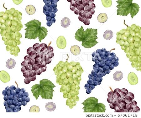 三種類型的葡萄的水彩插圖 67061718