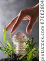 Amanita vittadinii mushroom and human hand on gray 67062804
