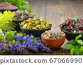 Bowls of dry medicinal herbs on table. 67066990