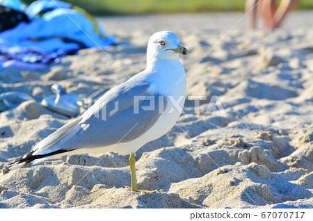 美麗的野生鳥,在熱帶的海灘 67070717